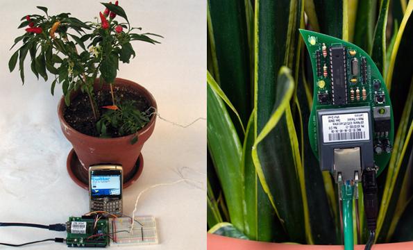 Botanicalls a planta conectada no Twitter